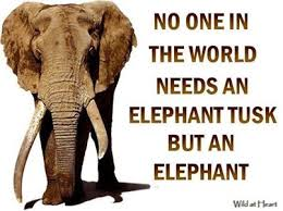elephant no one needs a tusk