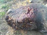image of a rhino...brutally mutilated