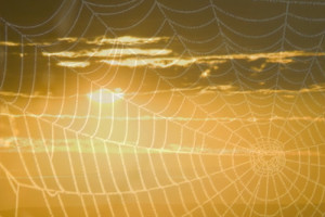 spiderwebs pic